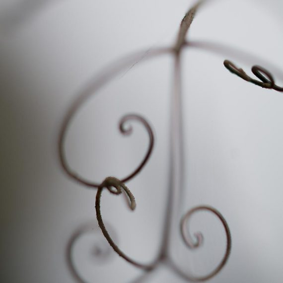 Pois de senteur vivace (Lathyrus latifolius)