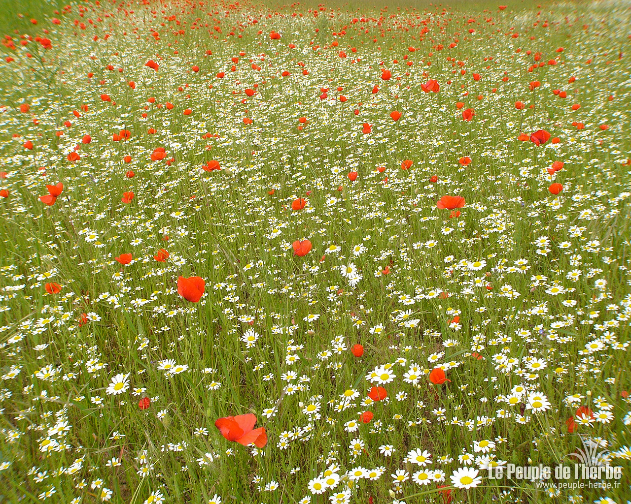 Tags fonds d'écran 1280x1024 écrans wallpaper fleurs nature