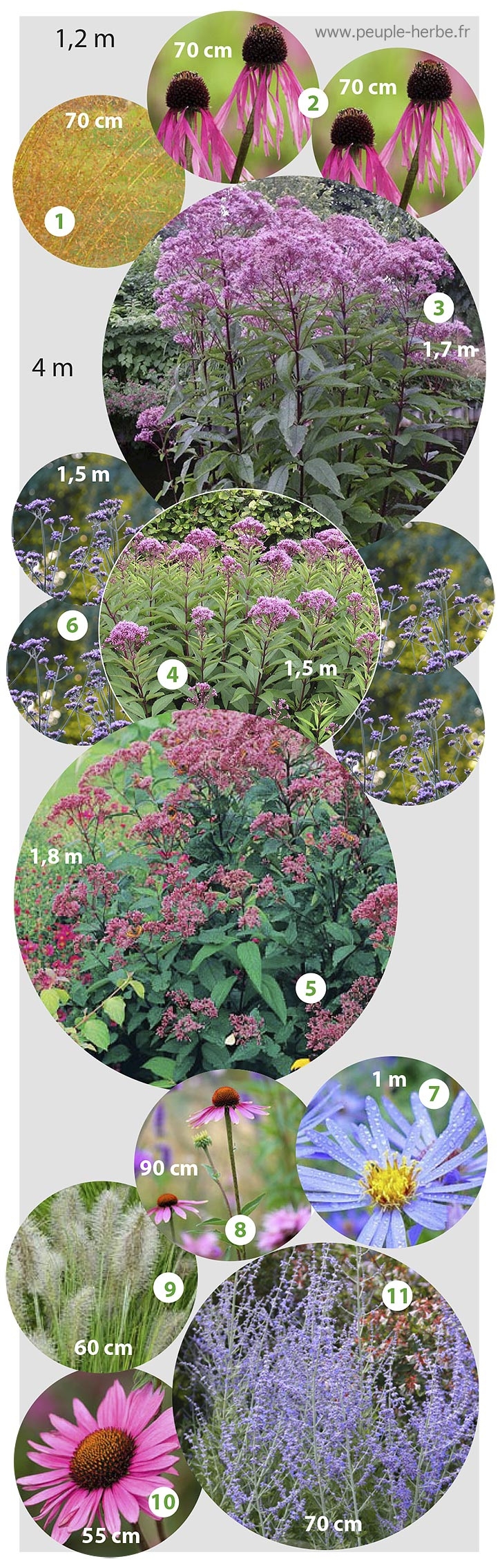 Massif vivaces à floraison automnale