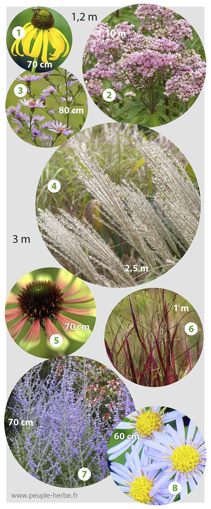 Bordure vivaces automne : asters, graminées, echinacées, eupatoires.